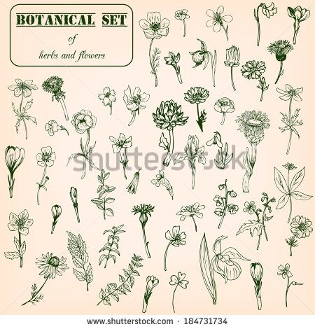 Botanical Illustration Stock Photos, Images, & Pictures | Shutterstock