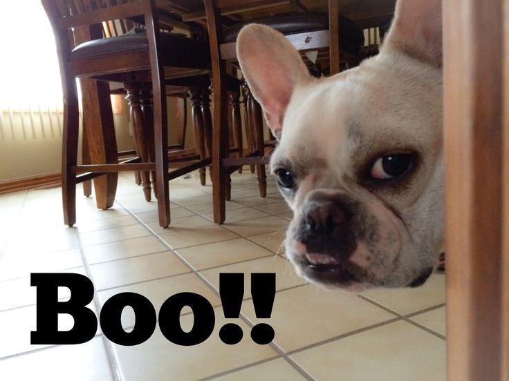 French Bulldog Sneak!