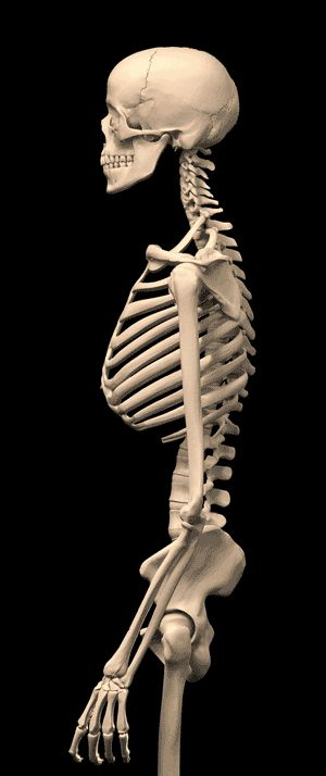 Changes in the skeleton of those who do not hold their posture.