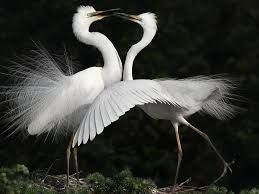 Image result for white crane