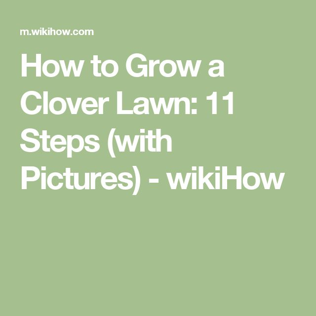 how to get rid of clover in your garden
