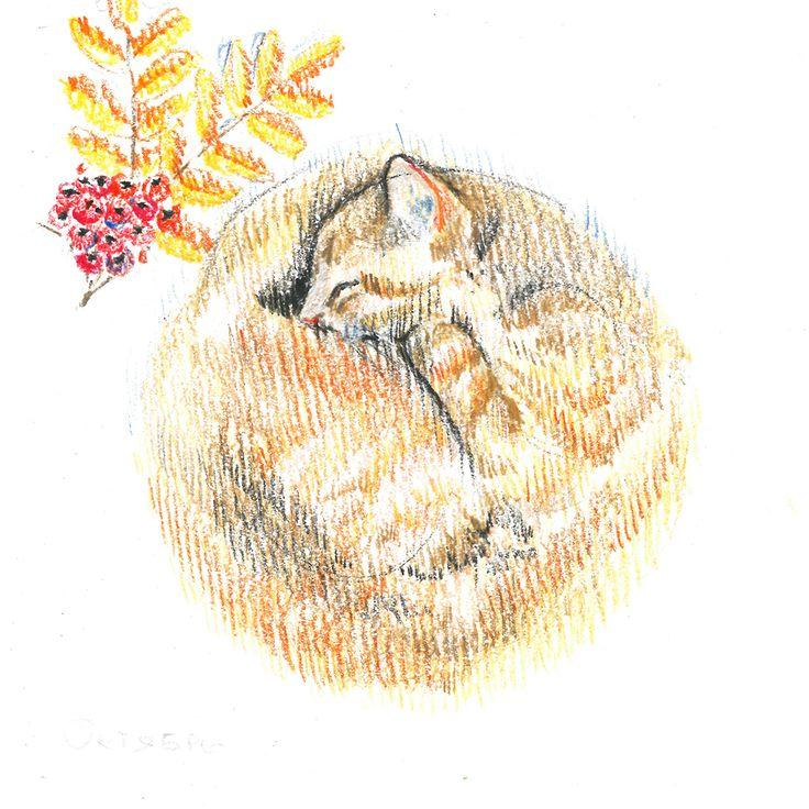 Red-headed cat, sleep, rowan, rowanberry, autumn, сolour pencils, graphic, illustration, draw, рыжая кошка, кошка спит клубочком, рябина, осень, ягода, графика, иллюстрация, цветные карандаши.