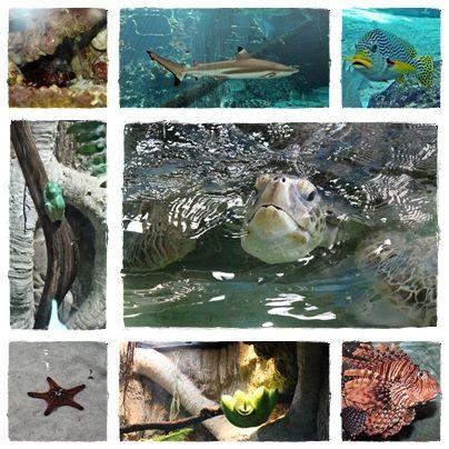 Rockhampton Aquarium
