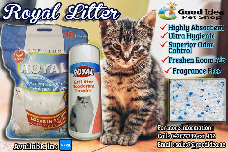 Royal Crystal Litter plus Cat Litter Deodorant Powder has the highest absorbency of any litter, and has excellent moisture control and complete odor elimination for an extended period of time compared to other litters. For affordable prices :) For more information: Call:042677789 loc 112 Email:sales7|@goodidea.ae ◘ We are open for those who have petshops,pet store and Good samaritans helping those stray with promotional offer ♥ Also Available in : SOUQ.COM and JADOPADO.COM #DXB #DubaiCats…