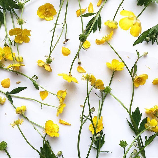 キンポウゲ Niittyleinikki  Ranunculus acris Meadow buttercup