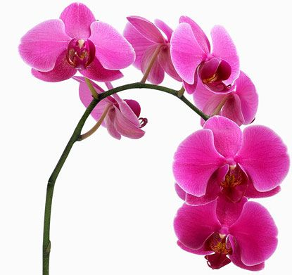 gorgeous - love me some orchids!!