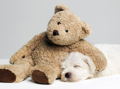 Love the bear. Wish one of my dogs would sleep through a pic.