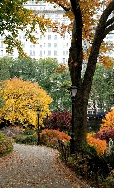 NYC. Autumn view in Central Park near the Pond | Flickr - Photo by Terri Phillips