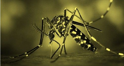 Zika Virus Symptoms seen by sexually transmitted. According to Florida health officials, this sexually transmitted Zika Virus found in 2017 is the first