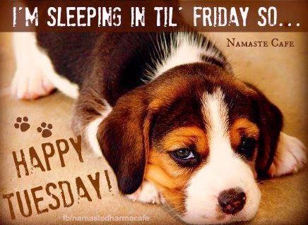 Happy Tuesday quote via Namaste Cafe at www.Facebook.com/NamasteDharmaCafe