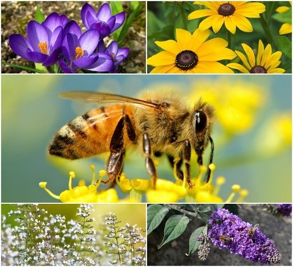 20 Beautiful Flowers To Attract Bees To Your Garden ...