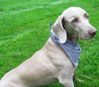 how to make a dog bandana without sewing