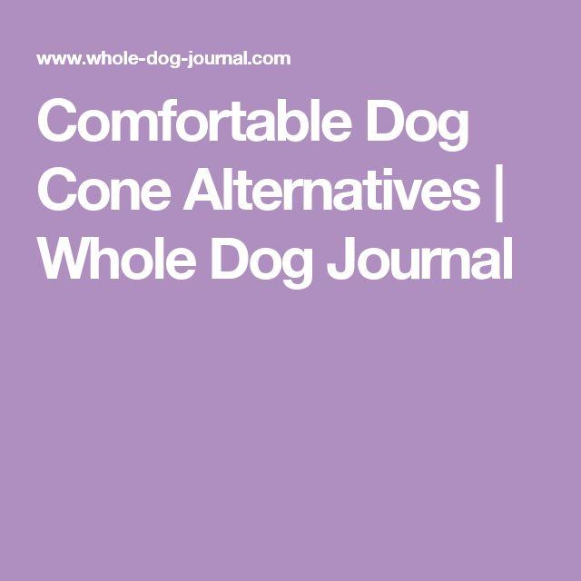 Comfortable Dog Cone Alternatives | Whole Dog Journal