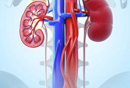 The primary objectives of a diet for stage 3 chronic kidney disease are to slow the progression of CKD and treat associated complications. A diet for CKD should support healthy blood pressure and blood sugar levels. This typically involves limiting salt and protein intake, as well as following a diet that supports optimal blood sugar control....