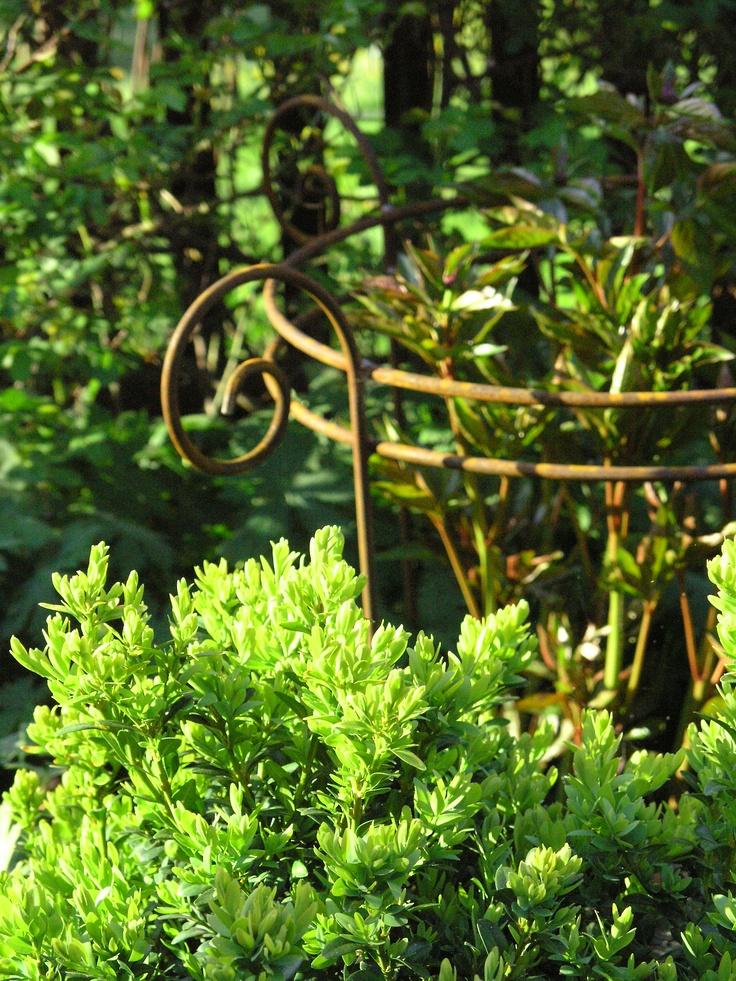 Staudenfreund. Hier nähere Infos: http://www.gartenbijoux.ch/cms/webshop/staudenfreunde.html