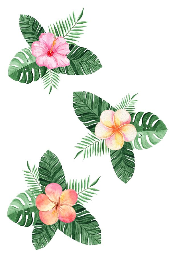 Tropical Flowers And Plants Flower Frame Tropical Flowers Flower Border