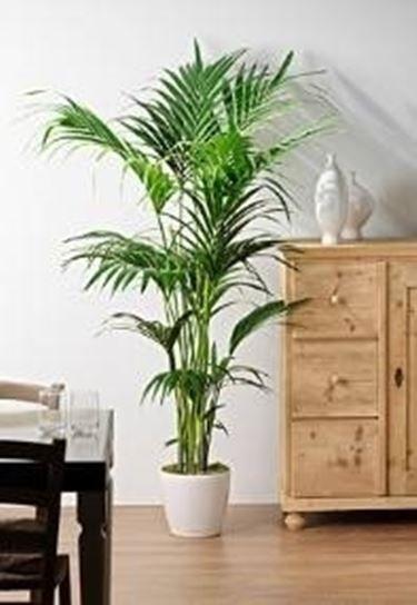 Oltre 25 fantastiche idee su piante da appartamento su for Kenzia esterno
