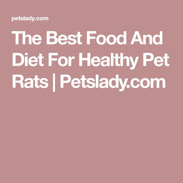 The Best Food And Diet For Healthy Pet Rats | Petslady.com