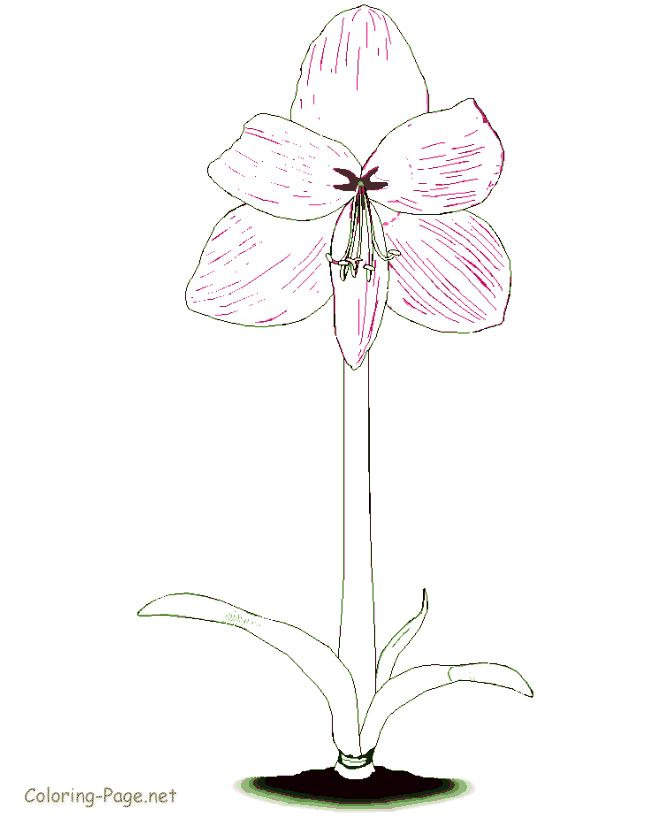 printable flower coloring pages flowers to color