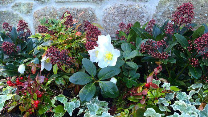 Ce n'est pas parce que l'hiver ne fait que commencer qu'il faut attendre le printemps pour jardiner ! Bien au contraire, c'est le moment idéal pour préparer de belles balconnières d'hiver, qui resteront belles pendant trois mois et apporteront de la couleur sur les rebords de fenêtre, la terrasse et le jardin !  http://www.deco.fr/jardin-jardinage/fleur/actualite-823802-belles-jardinieres-hiver.h