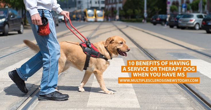 Service dogs are typically thought of as necessary companions for the visually impaired, but they can offer assistance to those with a variety of illnesses.