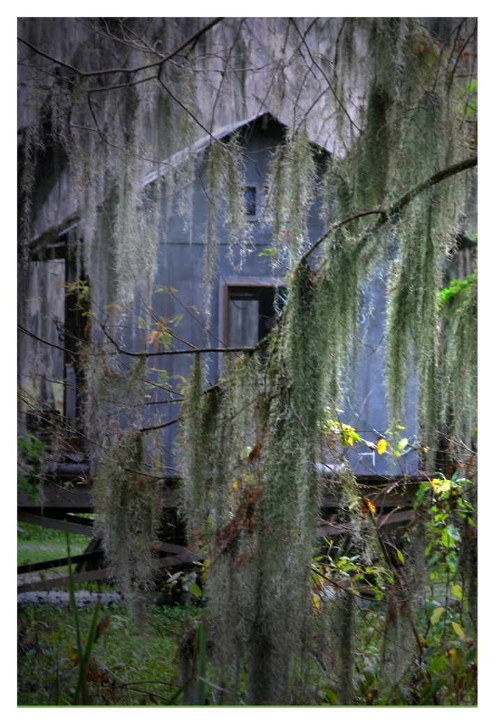 17 best images about caddo lake love this place on for Fishing cabins in louisiana