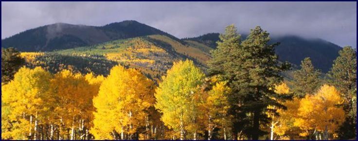 17 Best Images About Alpine Arizona On Pinterest