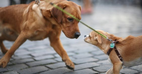 Comment faire pour qu'une rencontre entre deux chiens dans