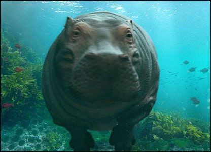 HELLO MR. HIPPO LET'S BE FRANDS