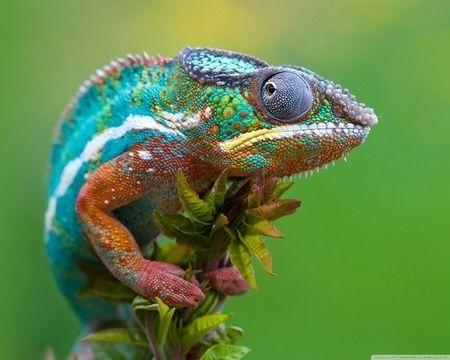 Animais com cores incríveis