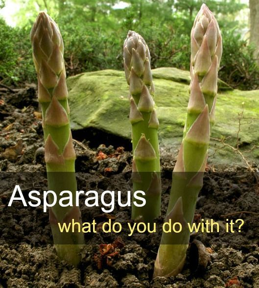 Preserving and Preparing Asparagus.. a multitude of ways!