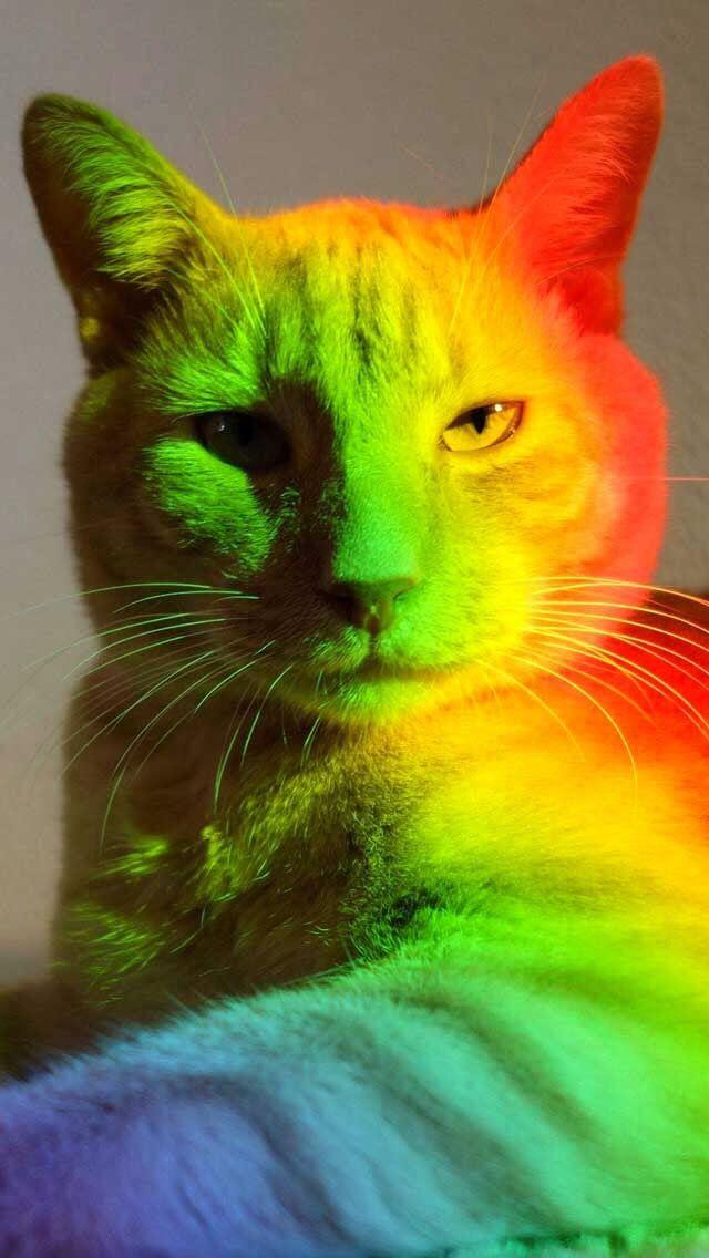 132 best images about Art Neon & Light on Pinterest   Neon ...