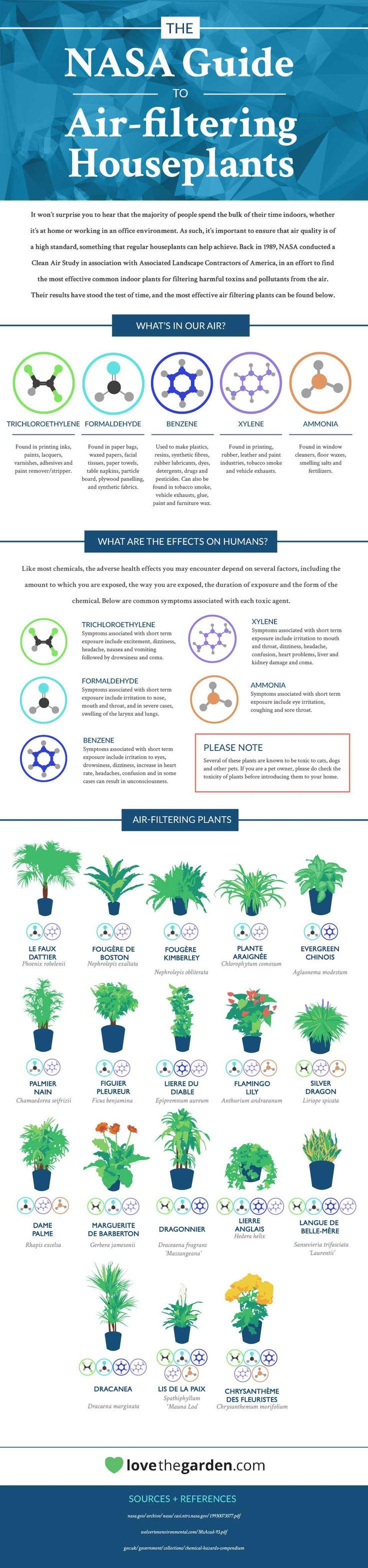 161 best images about projets essayer on pinterest - Les plantes depolluantes purifier l air de la maison ...