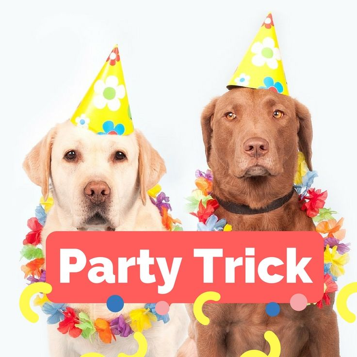 What is your dogs party trick?