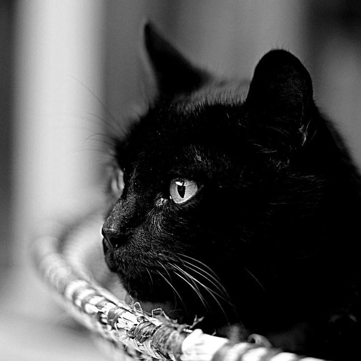 Cat by Ruurd Albada Jelgersma - Photo 68058499 / 500px
