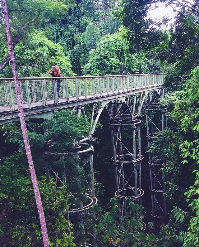 Sky walk, Canopy Walk, Sepilok, Borneo, Malaysia
