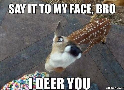 Image result for hilarious deer pictures