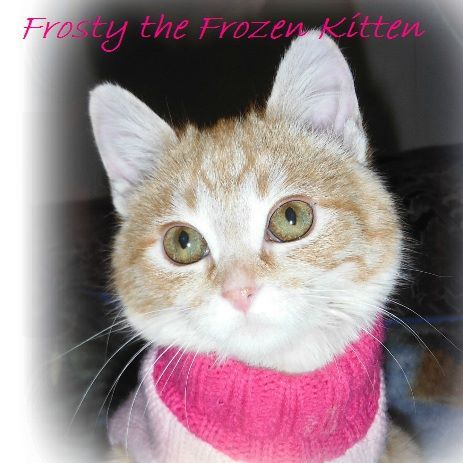 DOLLY HEROES Meet my furiend Frosty who was found frozen and barely alive. She spent 15 days in a neonate ICU oxygen incubator and defied all odds. Read about her amazing story of survival and the heroes who saved her ❤ Dolly