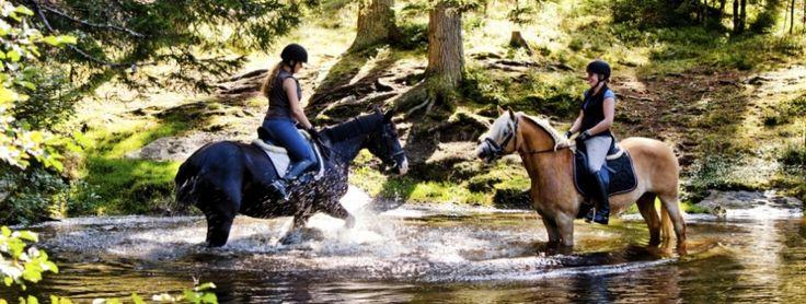 Reiturlaub am Schilcherhof mit Qualität und Spaß. Individuell auf Pferd und Reiter abgestimmte Unterrichtseinheiten und verschiedene Rassen wie Shetlandpony, Haflinger und Vollblut stehen zur Verfügung.