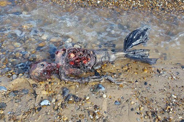 ΣΟΚ και ΤΡΟΜΟΣ στην παραλία | Η θάλασσα ξέβρασε το κουφάρι ΝΕΚΡΗΣ γοργόνας