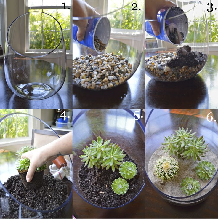 making terrariums | Water the terrarium with just enough water to moisten the sand, then ...