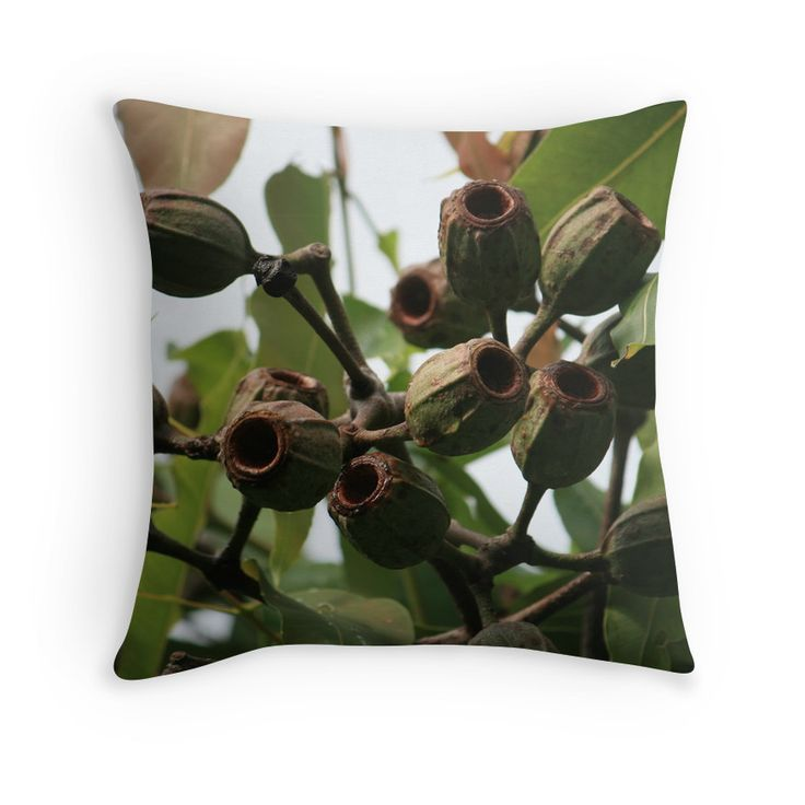 Gum Nuts After Flowering in Early Summer. Photography by Robyn J Blackford aka aussiebushstick via Redbubble throw-pillows.
