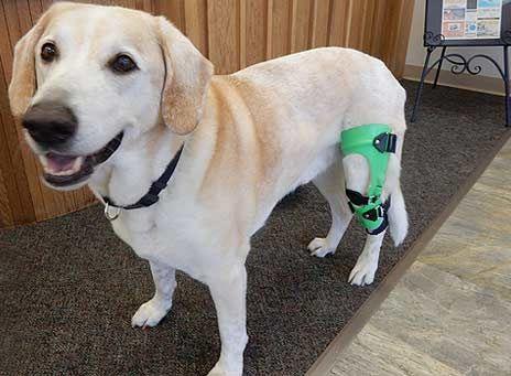 Dog Knee Brace | Leg Braces for Dogs | Canine Knee Braces | ACL Brace for Dogs | Canine Leg Brace | Dog Braces | MyPetsBrace.com