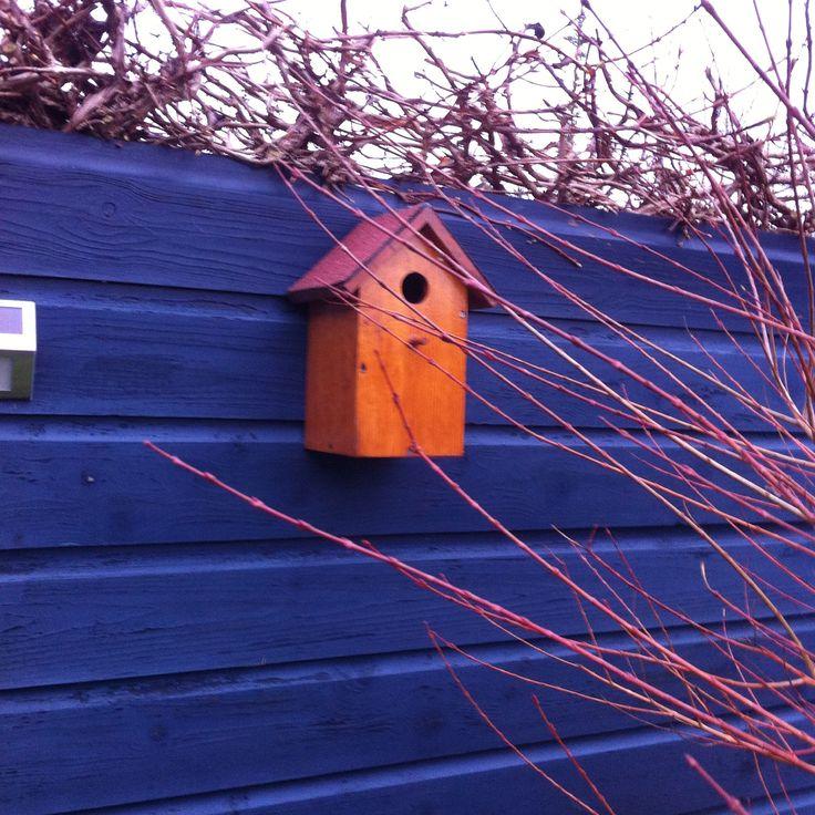 #Vogelhuisje koolmezen