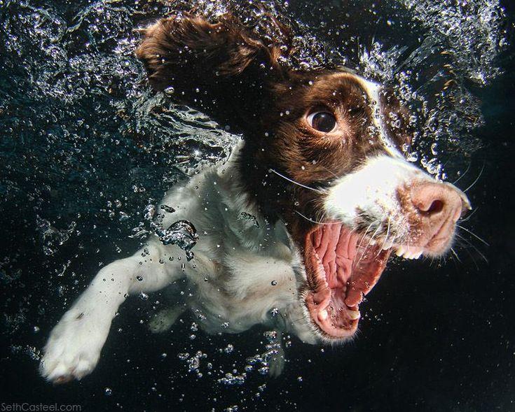 Underwater dog photographys by Seth Casteel