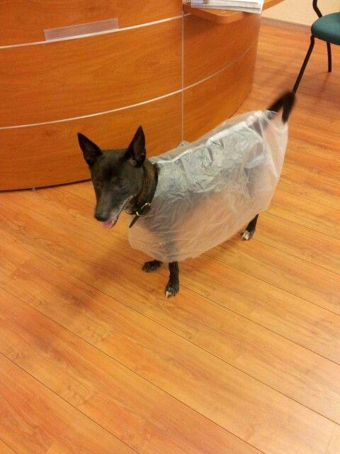 """Hilarisch! Mijn hond met een """"poncho"""" aan. Arme ziel ;)"""