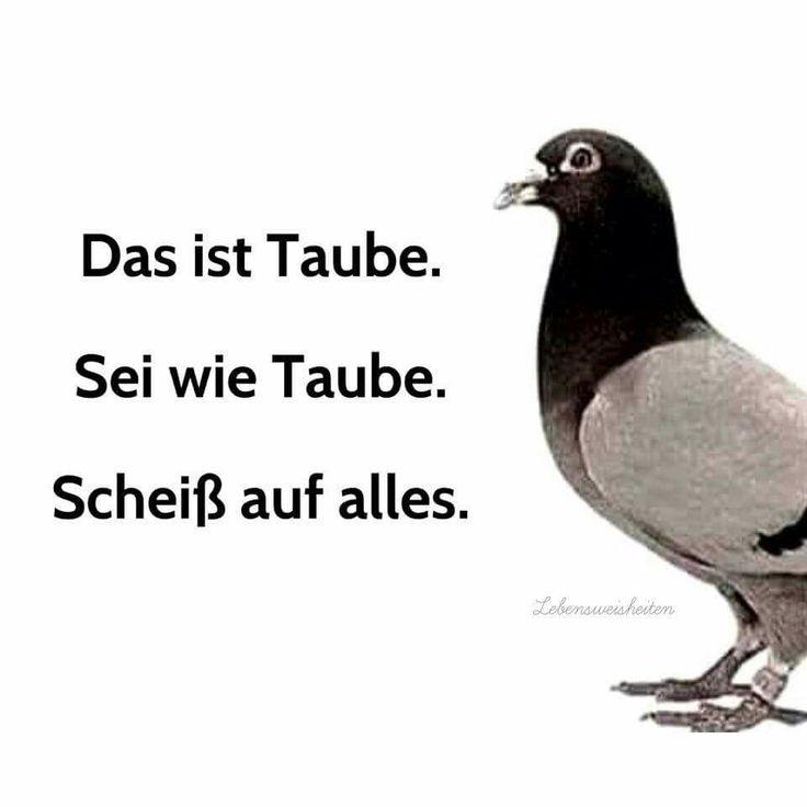 Das ist Taube