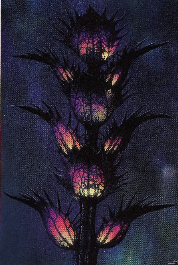 Grafiki roślin – Avatar Wiki - James Cameron, Avatar 2, Pandora, Neytiri, Navi
