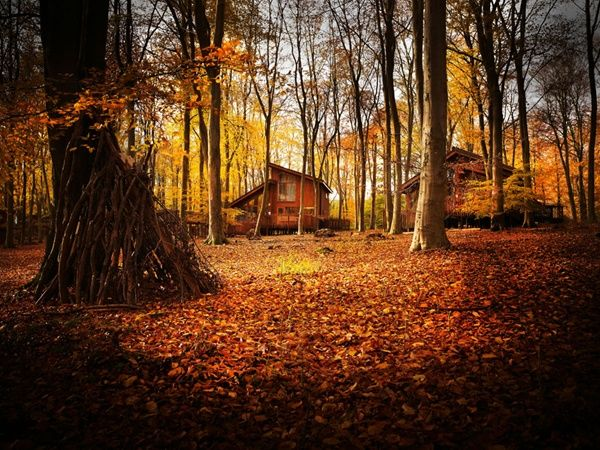Blackwood Forest self-catering, luxury cabins - stunning during Autumn! #leafwatching #hottub #ukbreak #forestretreat