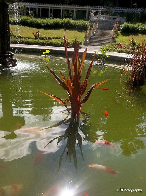 1000 Images About Pond On Pinterest Backyard Ponds